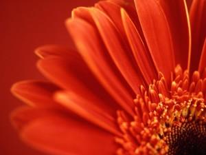 722_czerwony_kwiat