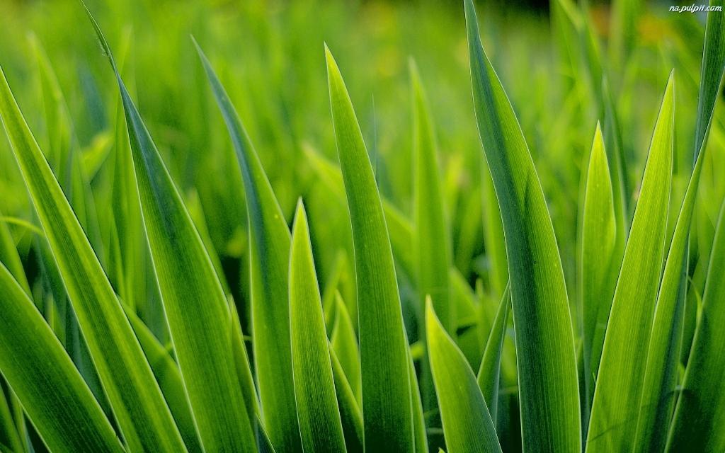 soczysta-trawa-zielona